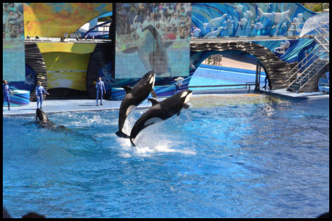 Sea World, Killerwale